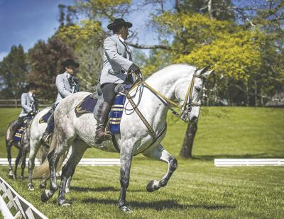 How to eliminate, not encourage, 'magnets' in our horses