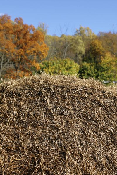 Hay lottery to benefit growers in ND, SD and MT