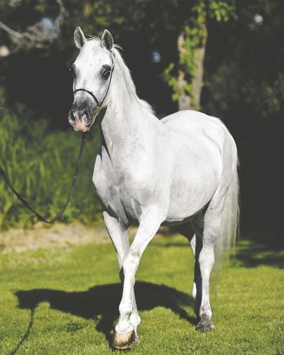 Winter care for senior horses