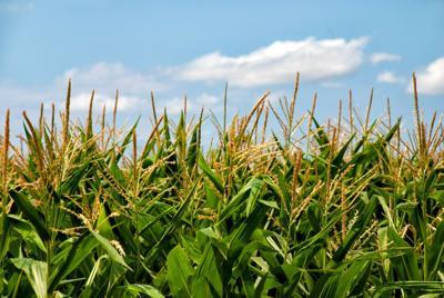 Wilkin Co. motivates farmers to address soil health