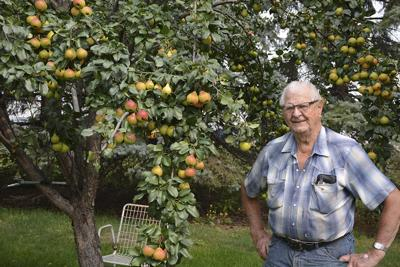 An orchard for Orville
