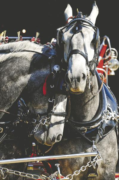 New Year's goals for the equestrian