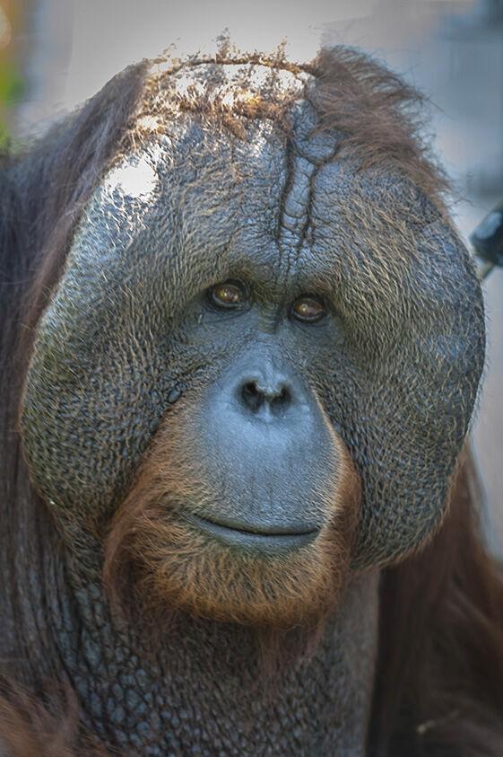 Chahinkapa Zoo receives Quarter Century Award
