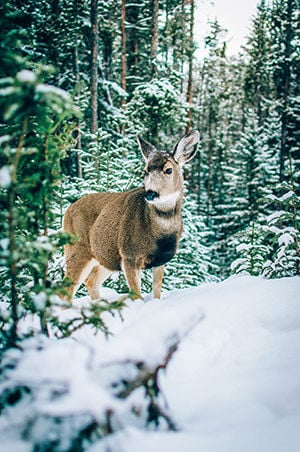3 THINGS TO KNOW ABOUT feeding wildlife in winter