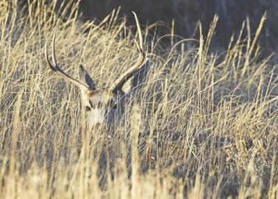 The deadline to apply for deer licenses is June 3