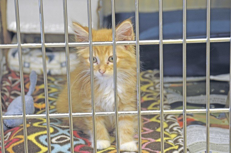 Shelter overrun with cats