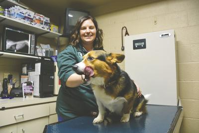 Pedersen joins Dakota Veterinary staff