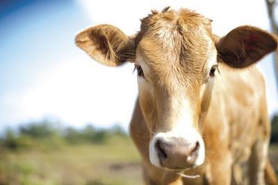 Scott County Junior Livestock Auction