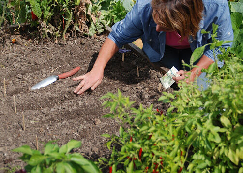 still time to plant