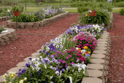 Flower beds are laid out in neat rows, easily accessible for weeding, watering and fertilizing.