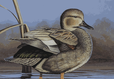 A gadwall painted by Jim Caturia of Cannon Falls will be on the 2019 duck stamp.