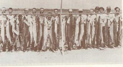 The famous Leech Lake Muskie Rampage of July 1955.