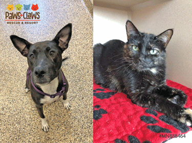 Zoey (left) and Emma are both up for adoption.