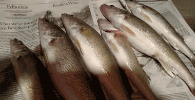 Six walleyes limit to change?