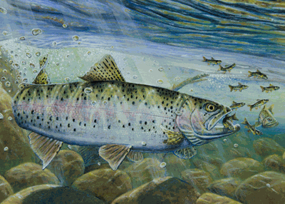Minneapolis artist Melissa Mickelson won the trout and salmon stamp contest with a painting of a rainbow trout eating a minnow. She is not only a first-time winner but becomes the first female to win the contest since 1990 and only the second in the history of the stamp.