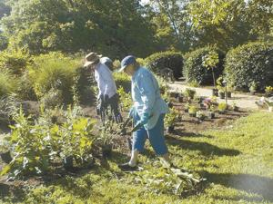 Bloom where planted, become a Master Gardener Extension Volunteer