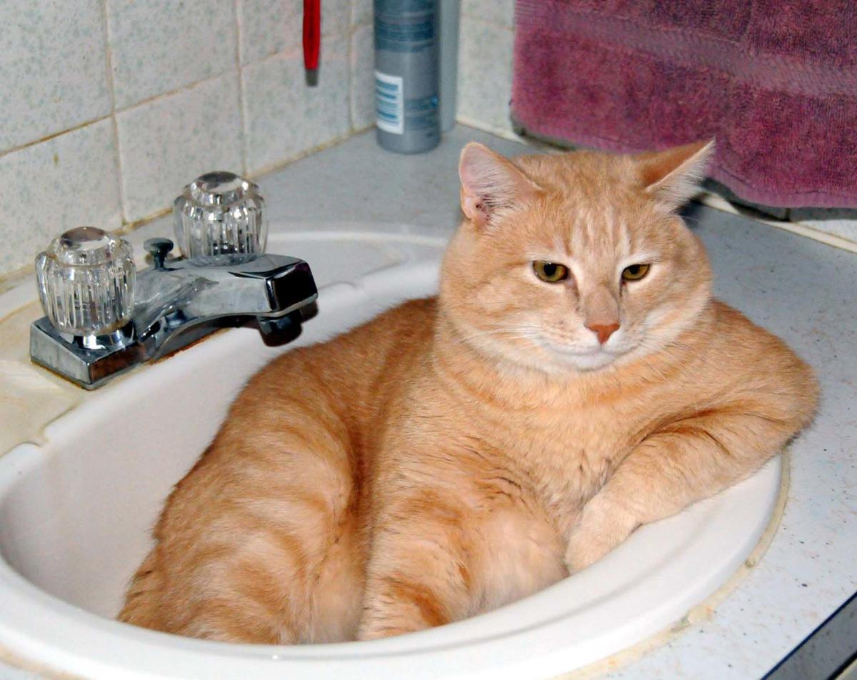 Bubba ready for a bath 2005.jpg