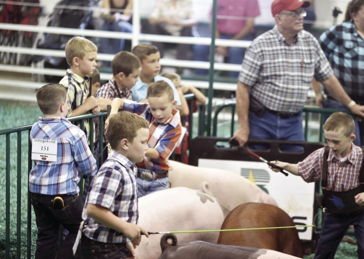PHOTOS: Daviess County 4-H fair 2018   News   washtimesherald com