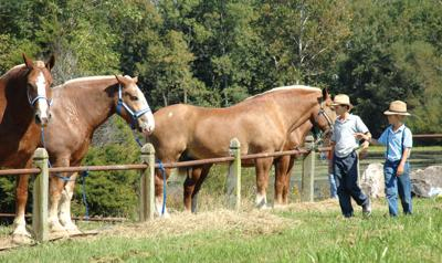 Annual Horse Auction Comes To Daviess County Local News