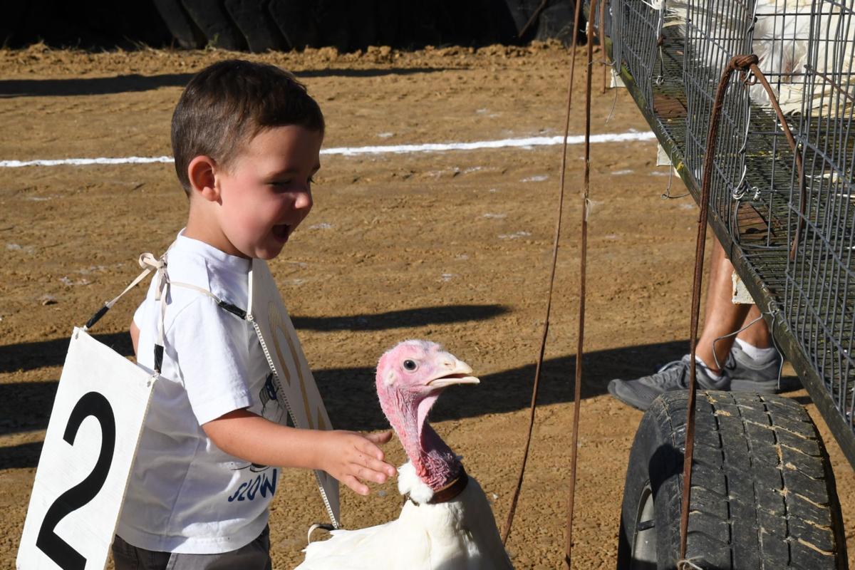 turkey race 2