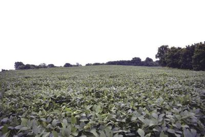 Tariffs could cost Daviess County farmers millions