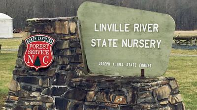 NCFS Linville River Nursery