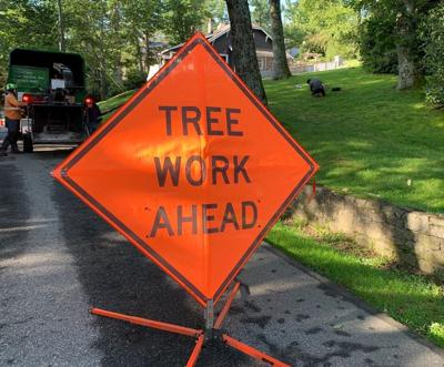 Correcting a tree problem can be time consuming and expensive.