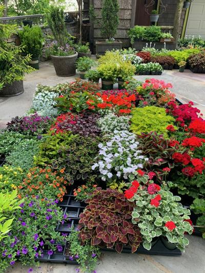 A riot of color about to be added to a garden.