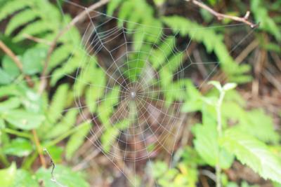 Orb webs are just one of many types that spiders can make.