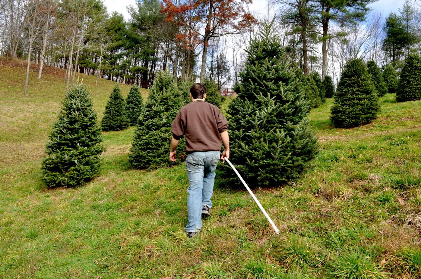Christmas Trees 2021 Watauga Democrat Take A Tour Down On The Farm Hcnc Wataugademocrat Com