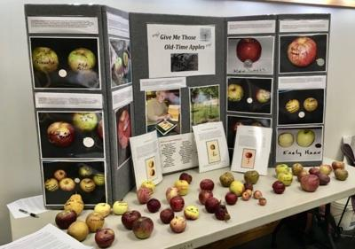 Heirloom apple display at the Watauga County Extension office.
