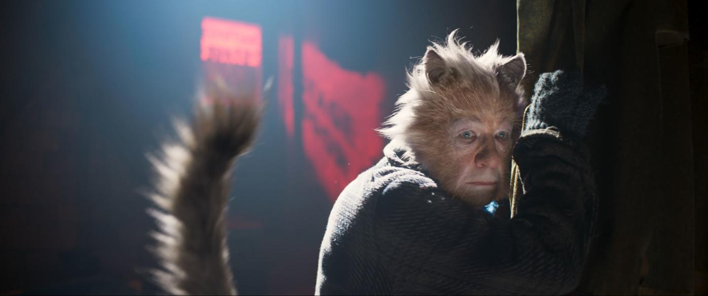 Cats Offers Memories And Dreams Movietimes Wataugademocrat Com
