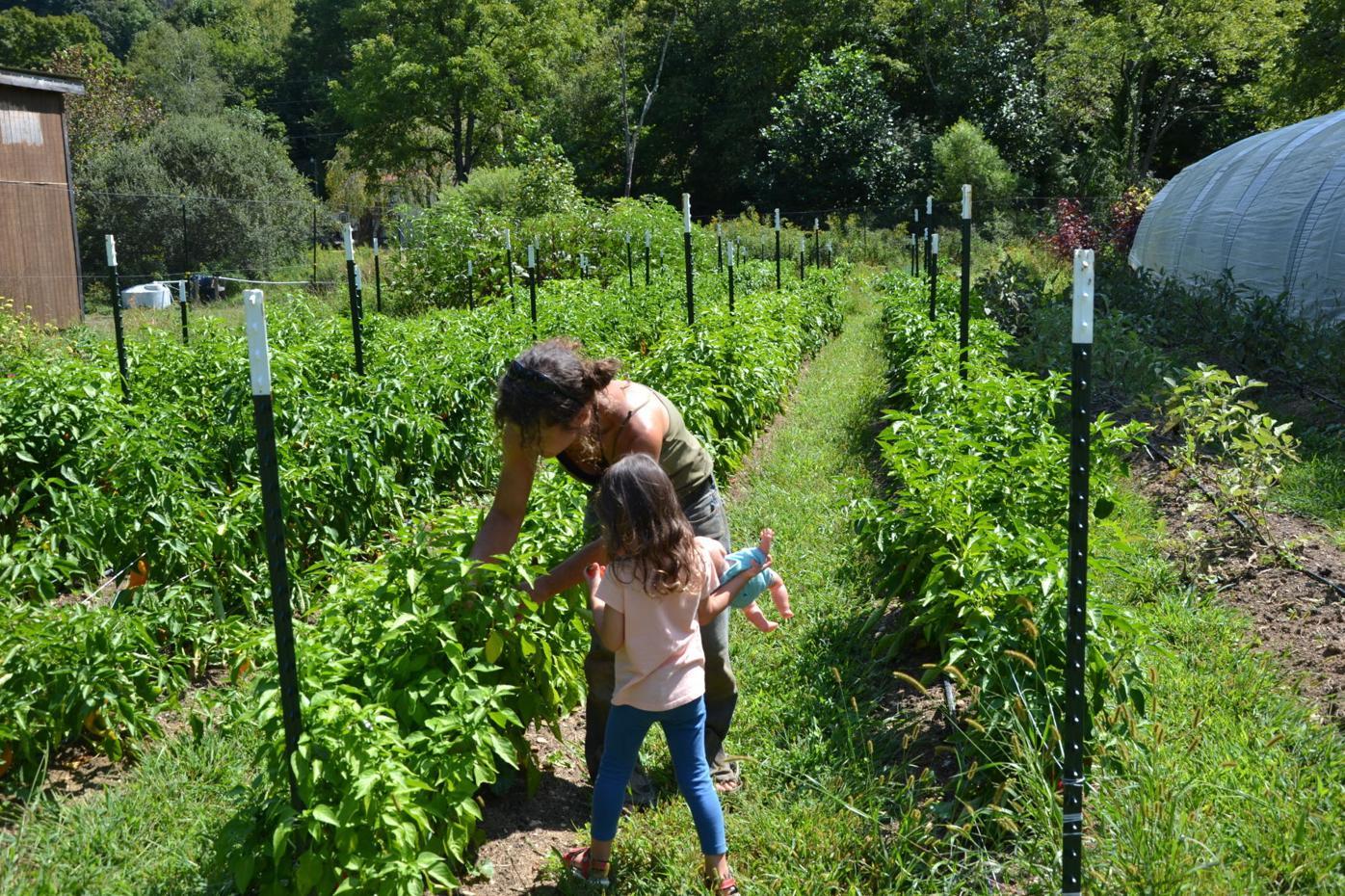 Simply Growing Farm