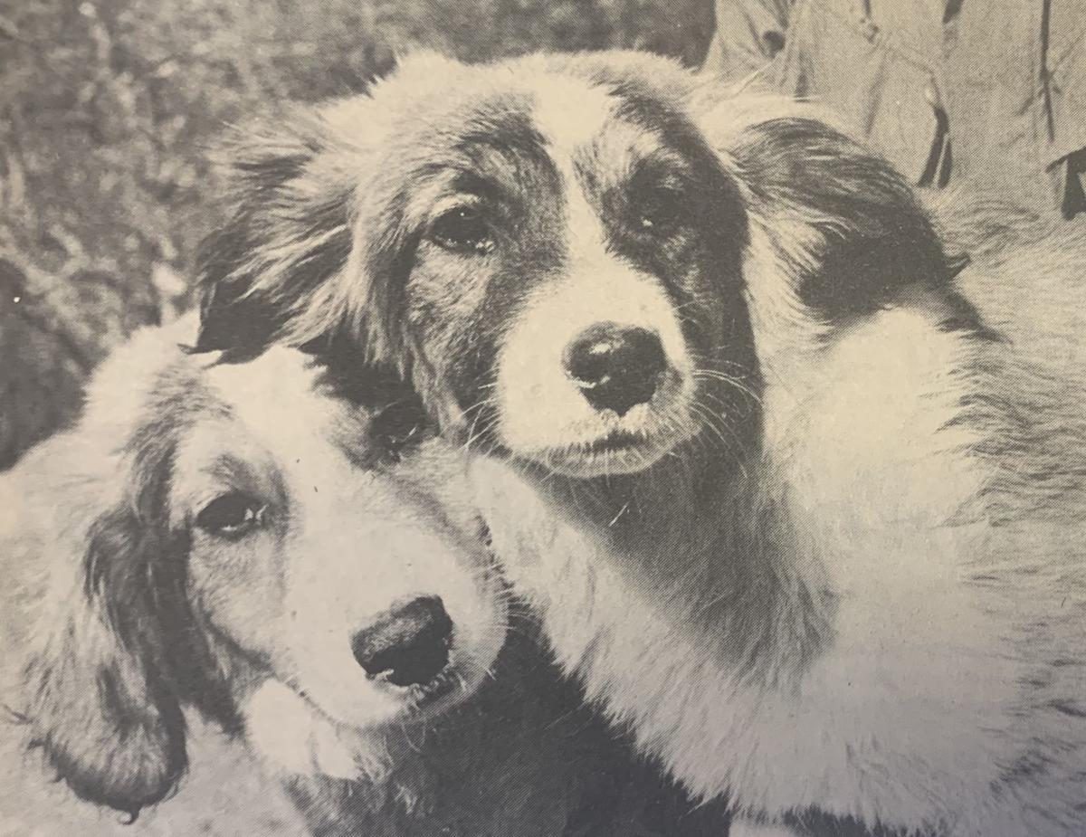 1970 - puppies