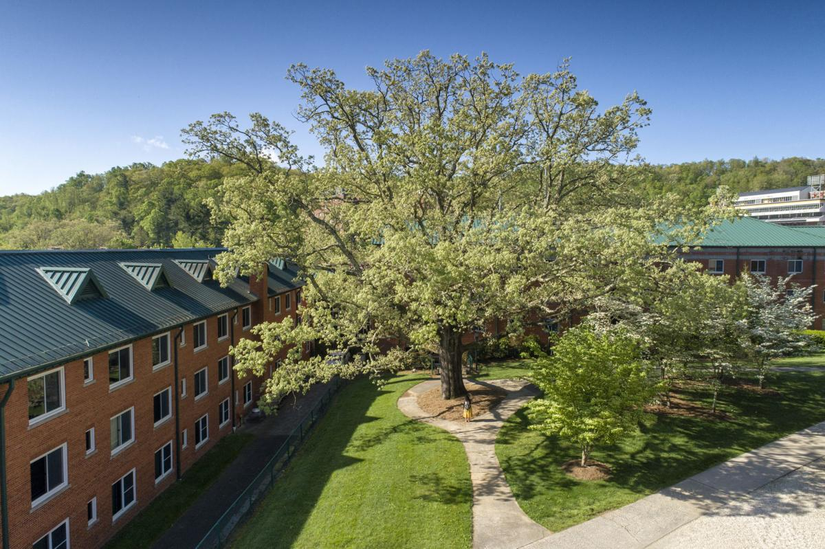 tree-oak.jpg