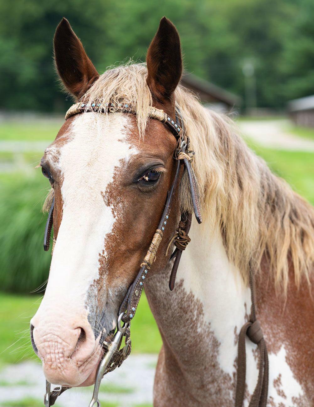 Embracing the mountain spirit on horseback