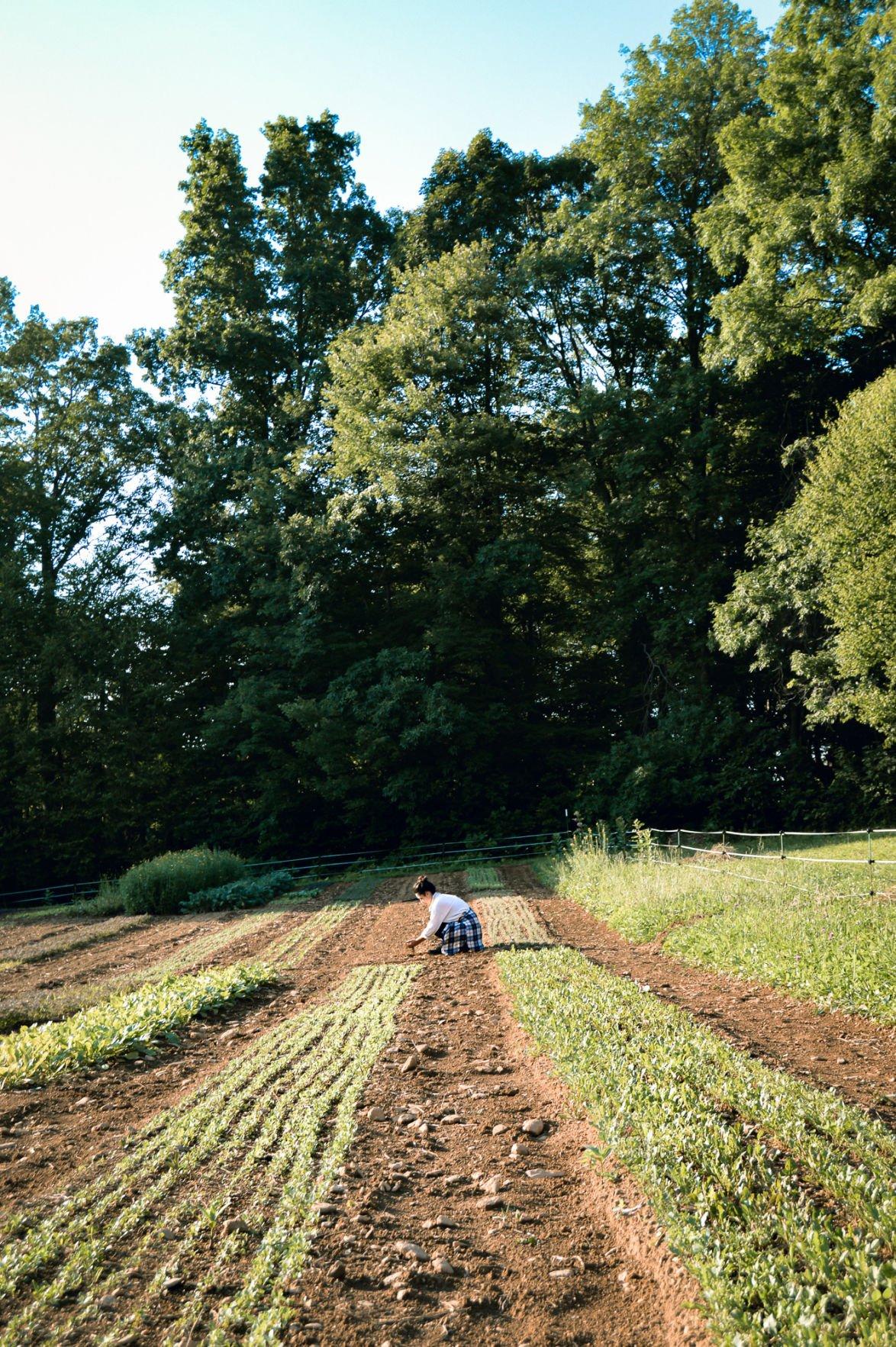 Mountainwise Farm