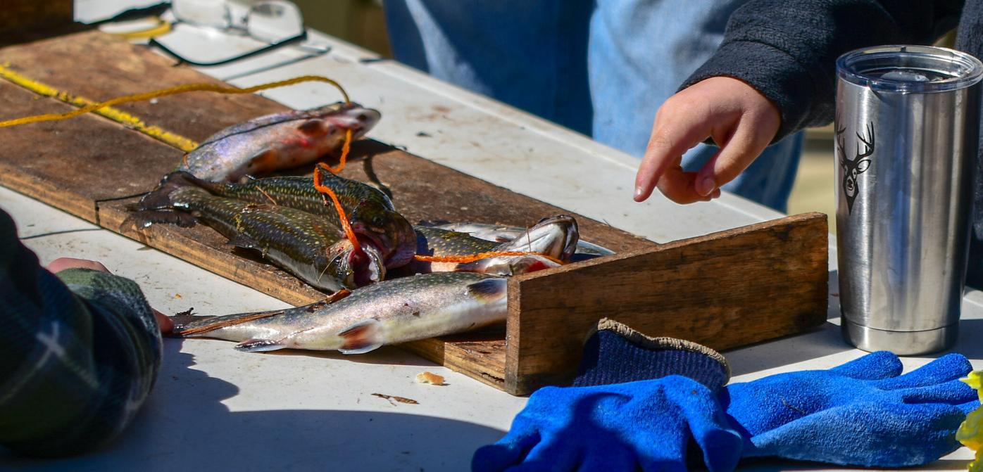 Measuring fish at Blowing Rock Trout Derby