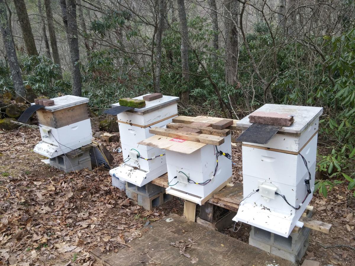 beemon-four-hives.jpg