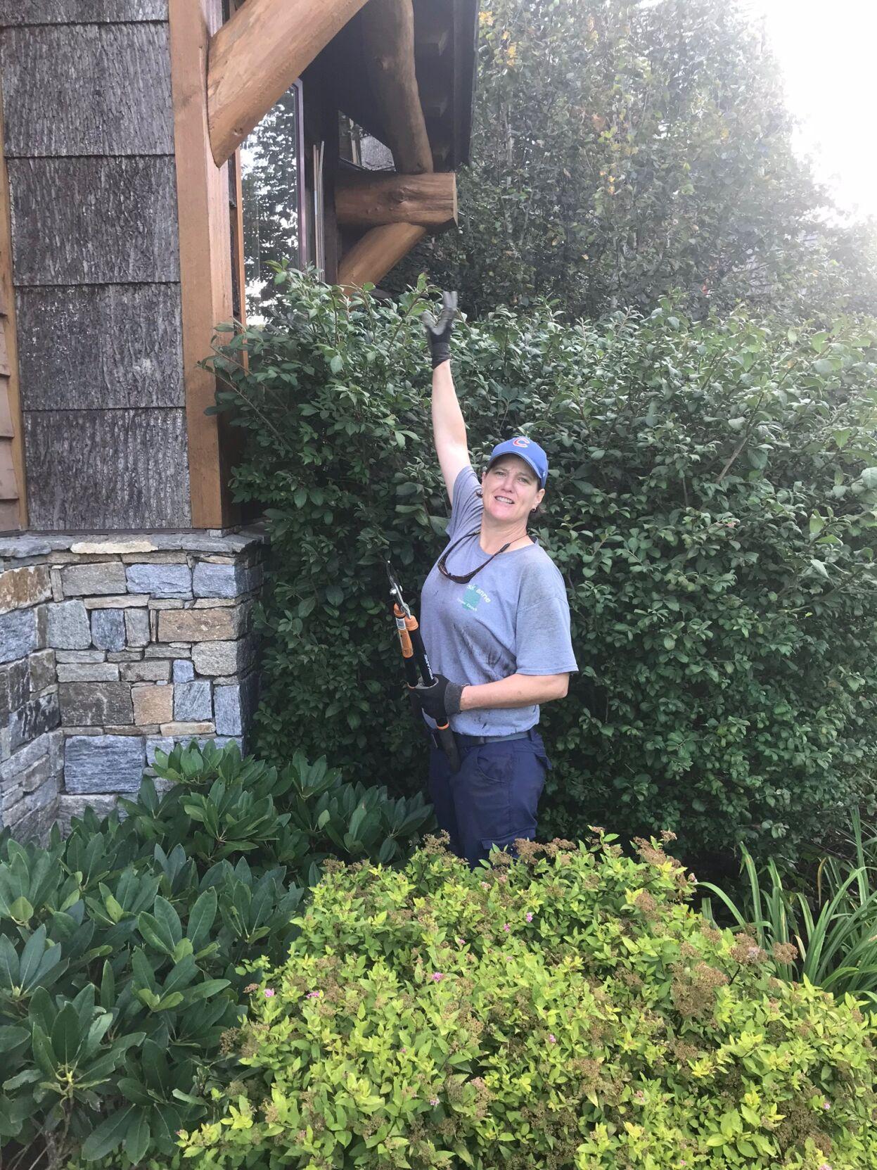 Anne pruning