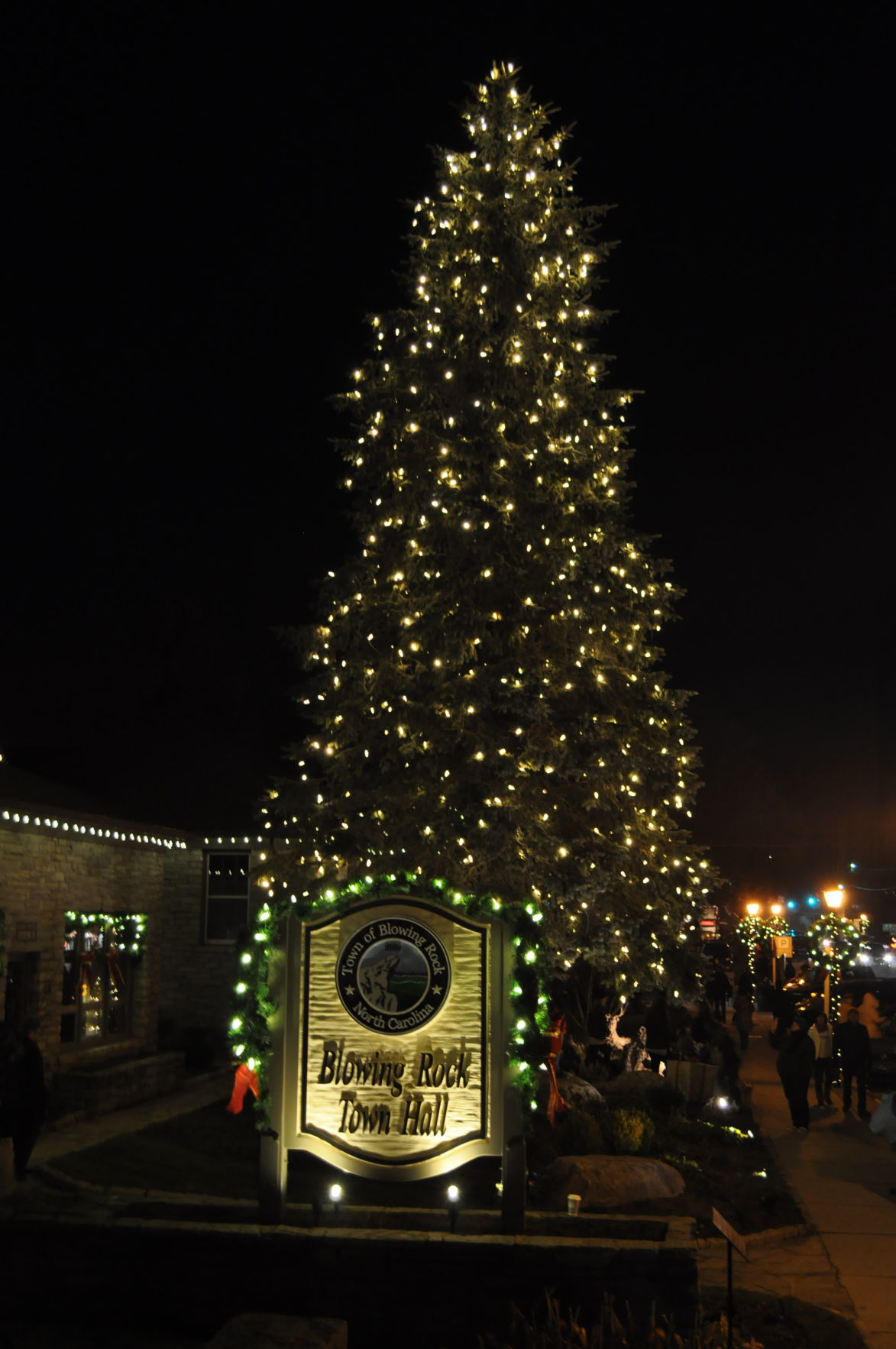 Town Hall tree