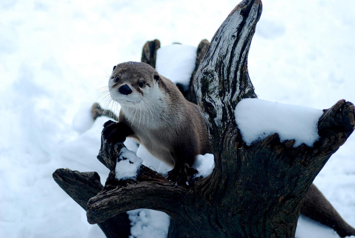 Holiday Otter