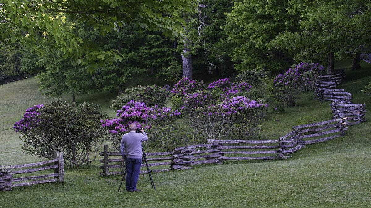 Photographing the rhododendron