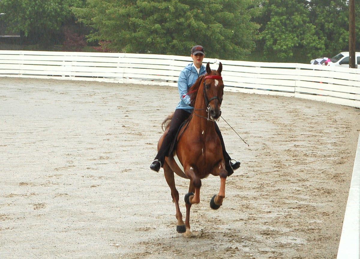 Saddlebred rider