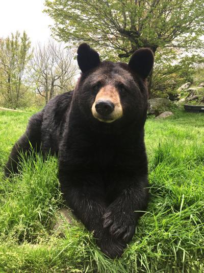 Gerry the bear