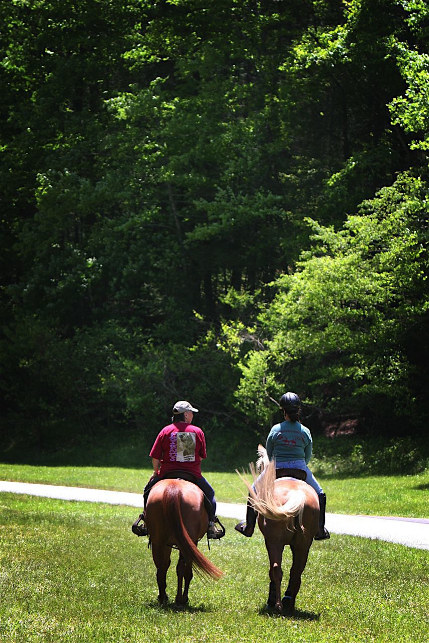 Equine experiences: horseback riding in the High Country