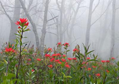 NC Native Plant Society outing is in West Jefferson, May 10-12.