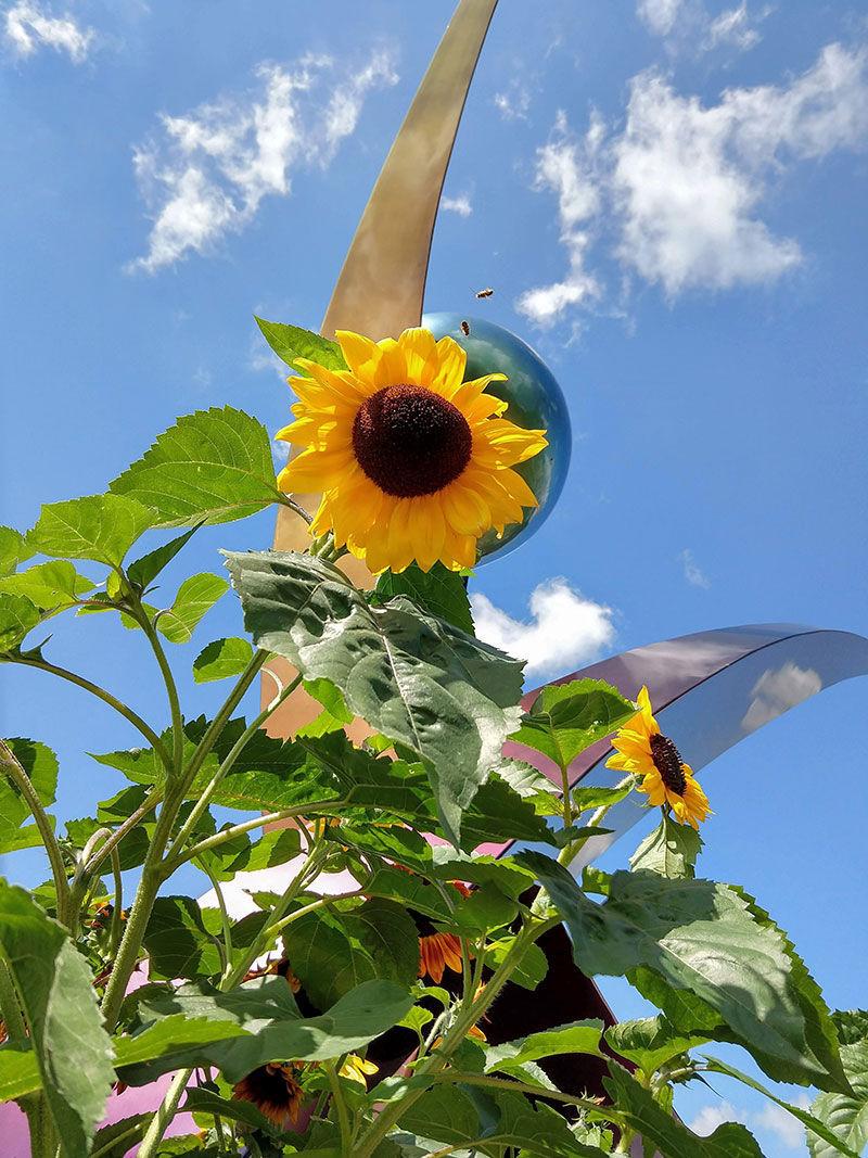 beefriending-sunflowers.jpg
