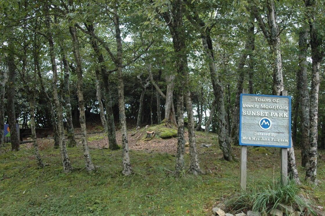 Sunset Park Beech Trees