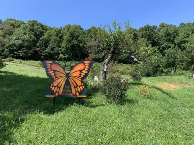 Orchard butterfly art.